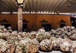 additives in tequila