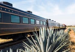 tequila train pic
